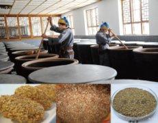 他牌诺丽发酵法:蒸煮、添加糖类、酵母菌发酵