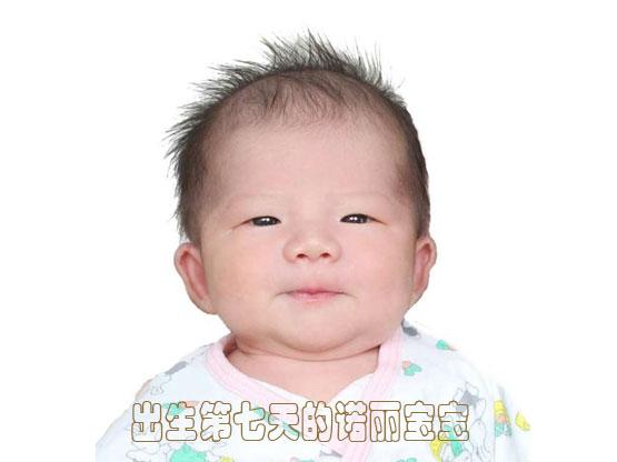 诺丽王1号诺丽宝宝